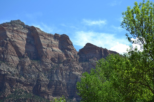Free zion national park usa utah tree canyons