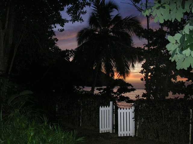 Free gate night outdoors sunset leaves beach palm tree