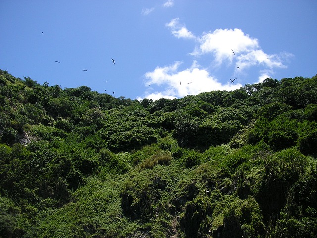 Free birds tobago mountain hill sky landscape greenery