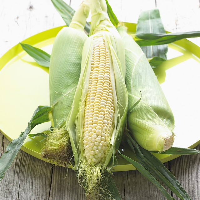 Free corn maize vegetable plant food yellow sweet corn