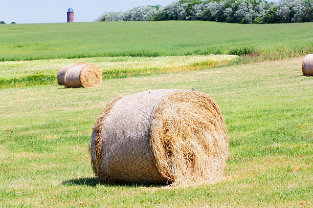 Free straw bales straw meadow field hay green grass