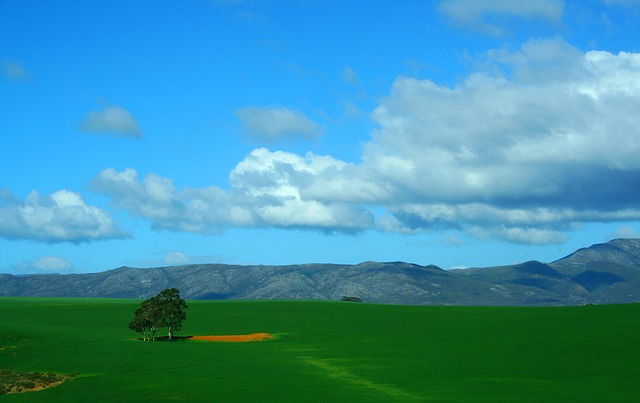 Free tree lonely grass mountains countryside landscape
