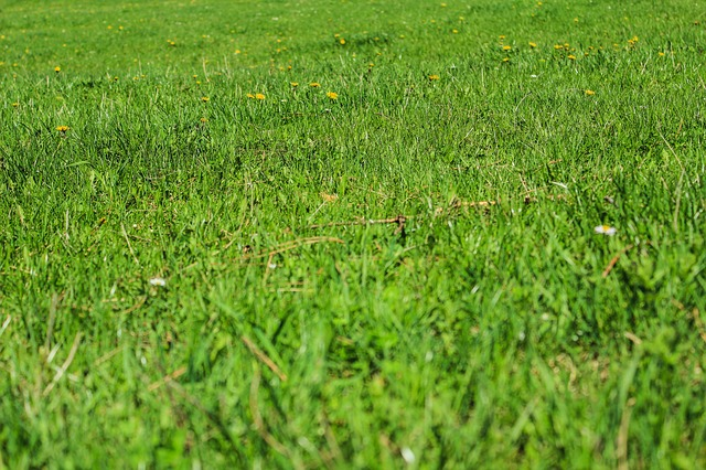 Free green grass nature grassy lawn plain spring