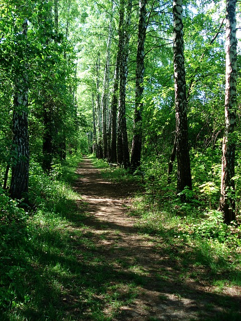 Free landscape nature footpath walkway forest path park