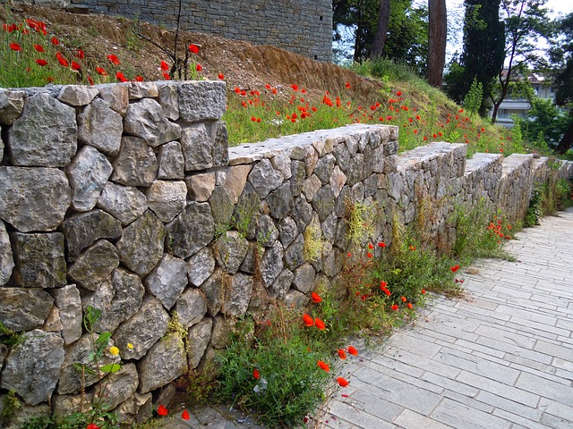 Free poppy red poppies stone wall
