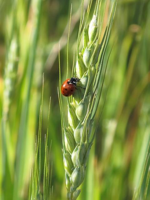 Free sarantontón ladybug animals insects nature macro