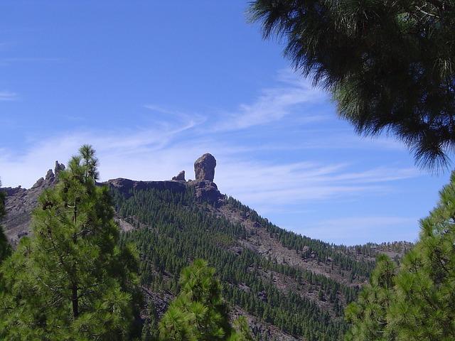 Free roque pine gran canaria