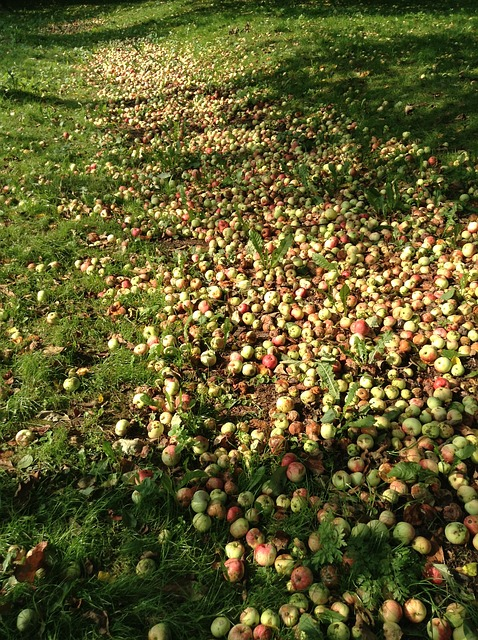 Free apples garden fruit in the summer time a lot