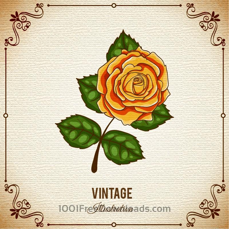 Free Vectors: Vintage flower illustration with frame   Backgrounds