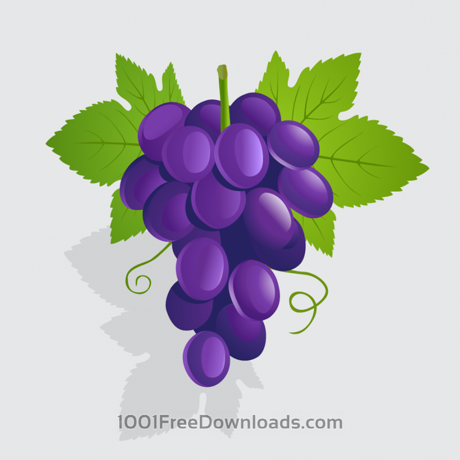 Free Vectors: Vector illustration Grapes | Nature