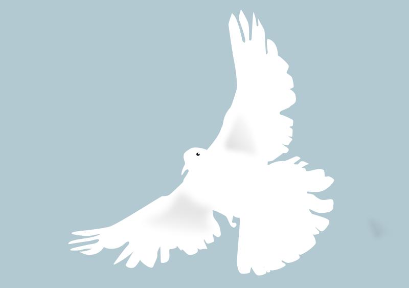 Free dove - colombe