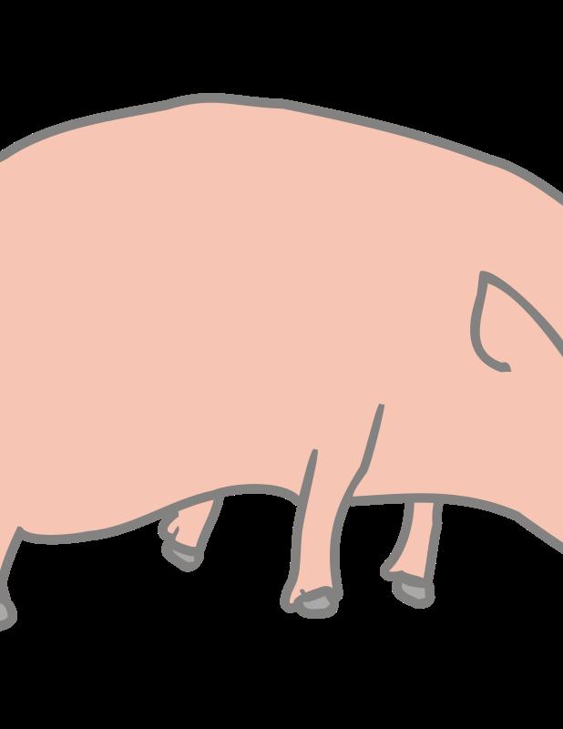 Free pig marcelo caiafa1