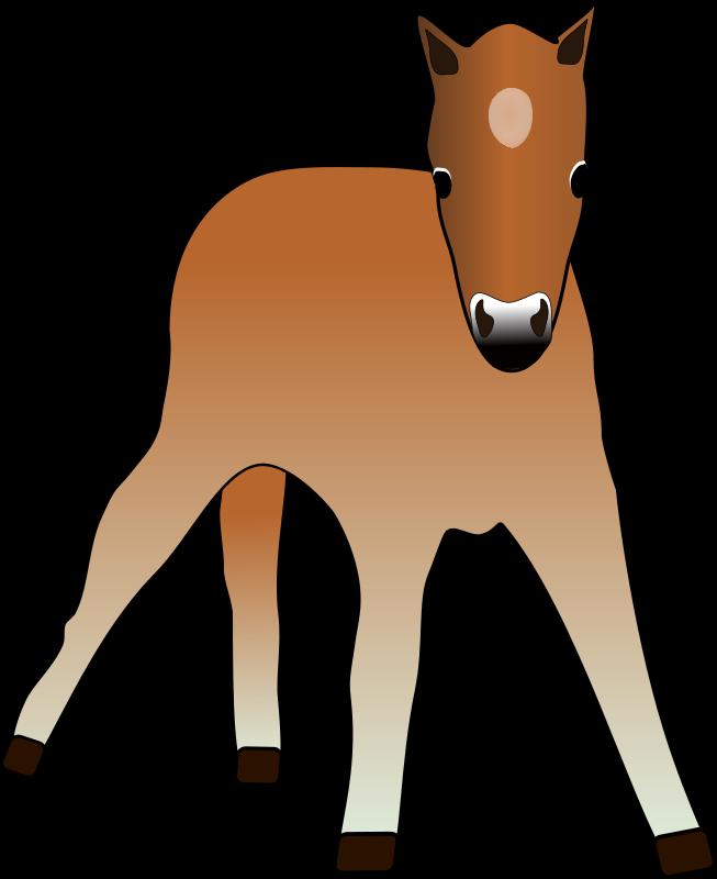 Free Foal