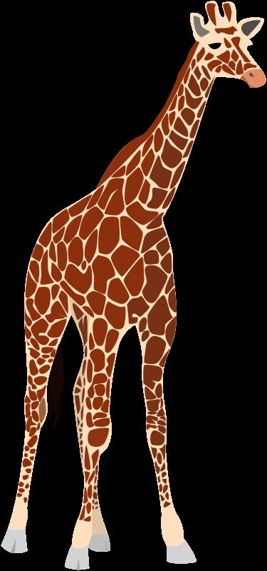 Free another giraffe