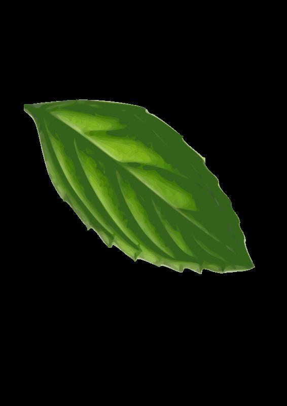 Free Mint Leaf( traced)