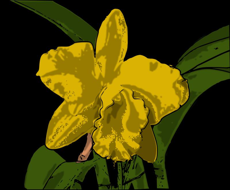 Free orquídea