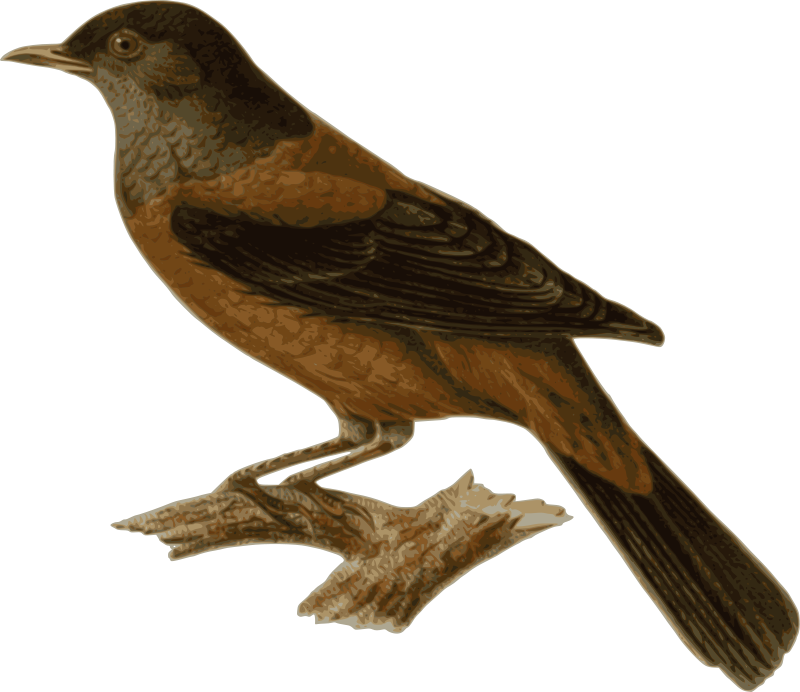 Image result for clip art rusty blackbirds