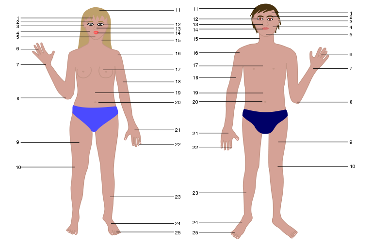 Free Human body, man and woman, with numbers