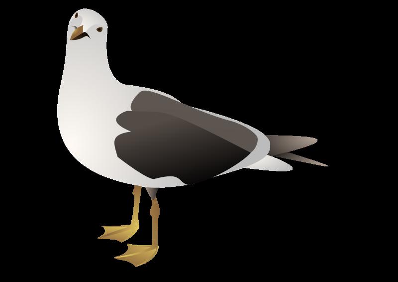 Free gull marcelo staudt 01