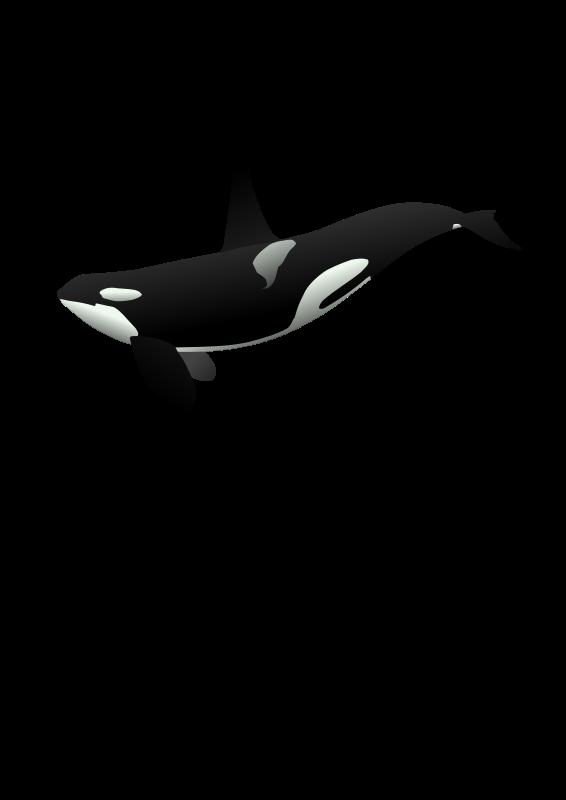 Free orca matthew gates r