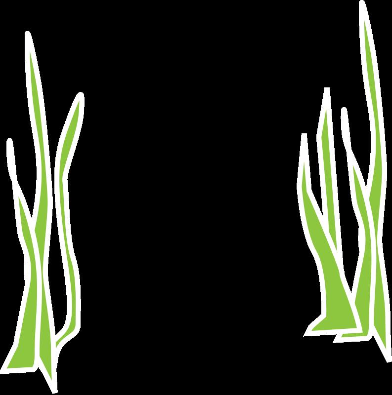 Free Reeds