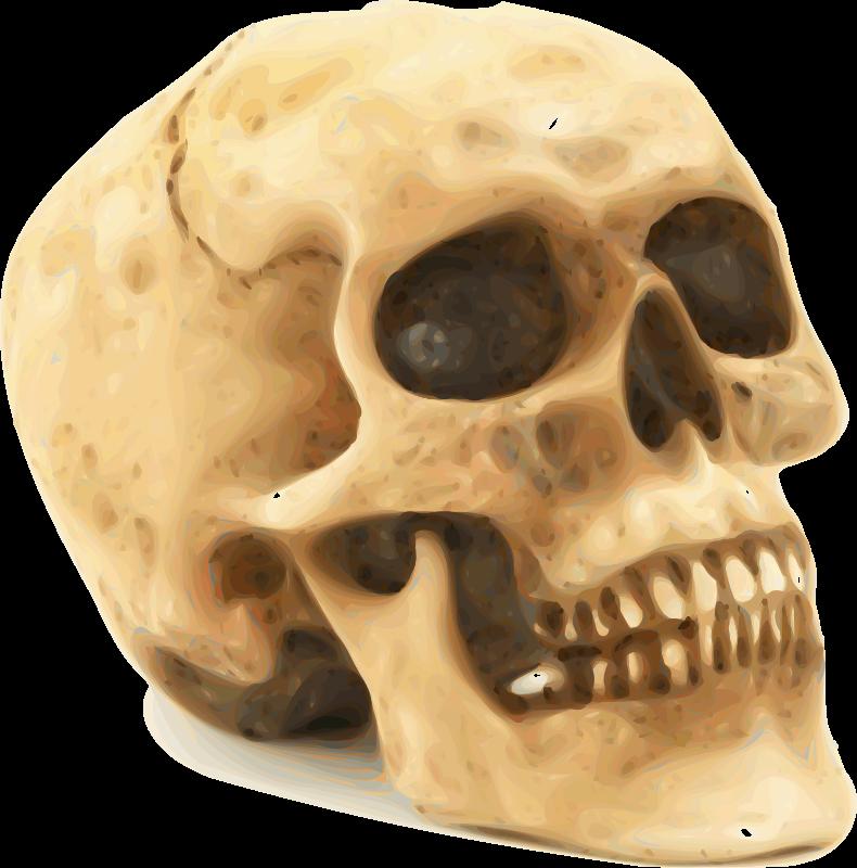 Free Skull