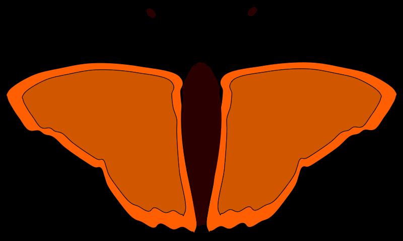 Free orange butterfly
