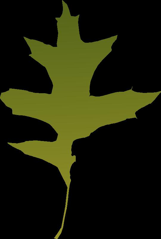 Free leaf oak green