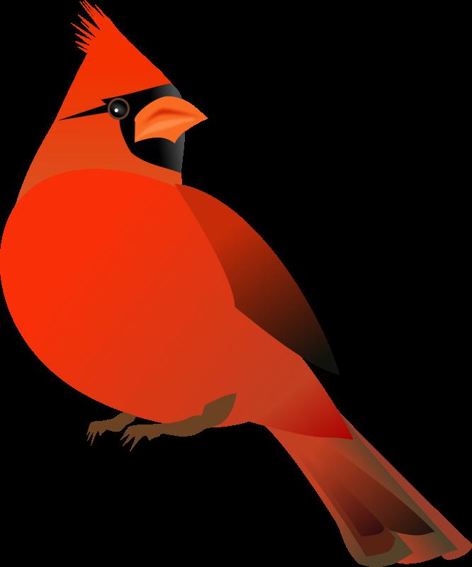 Free Red Cardinal