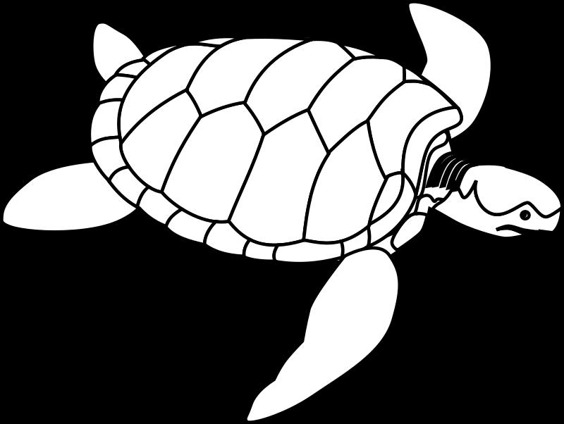 Free Green sea turtle line art