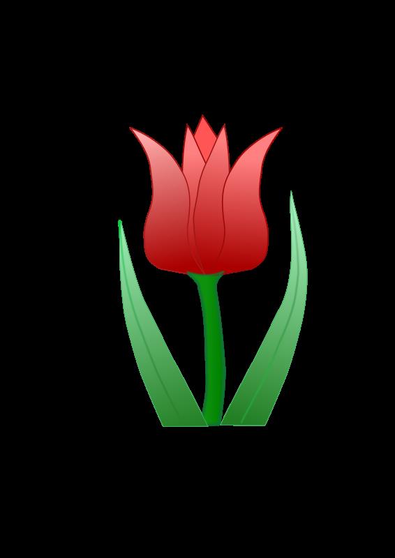 Free tulipa