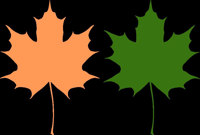 Free Maple leaves
