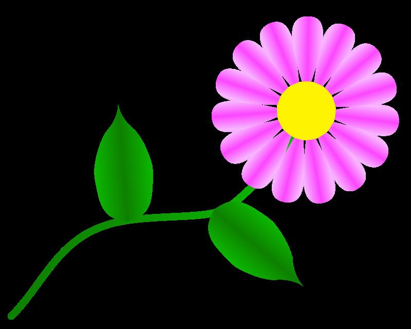 Free Daisy Fuchsia