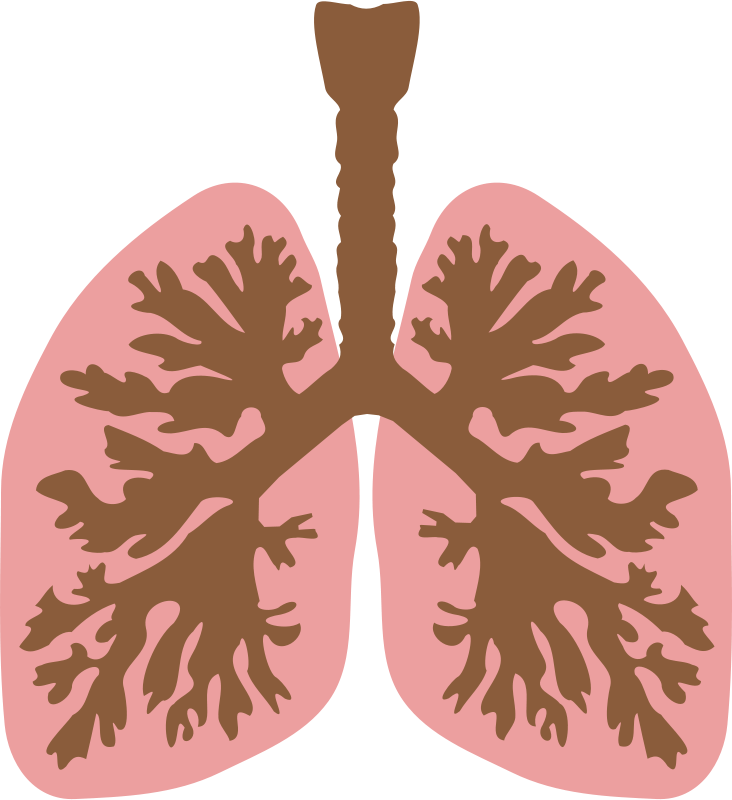 Free Lungs and bronchus