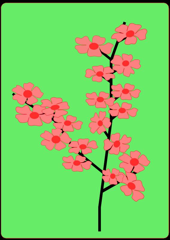 Free Flower, Flowers, Sakura