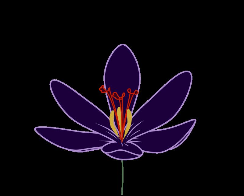Free Crocus Blossom