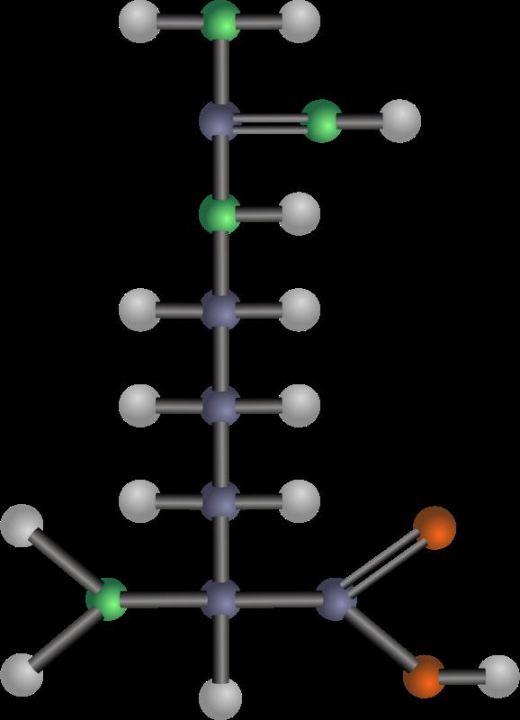 Free Arginine (amino acid)