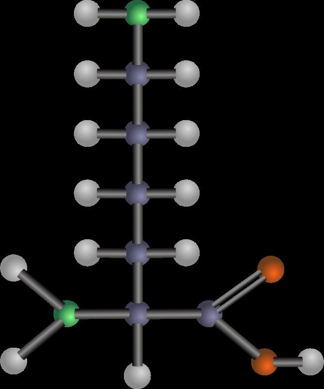 Free Lysine (amino acid)