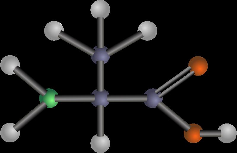 Free Alanine (amino acid)
