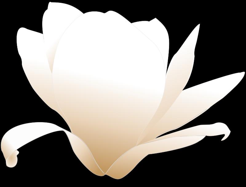 Free magnolia-white patricia 03r