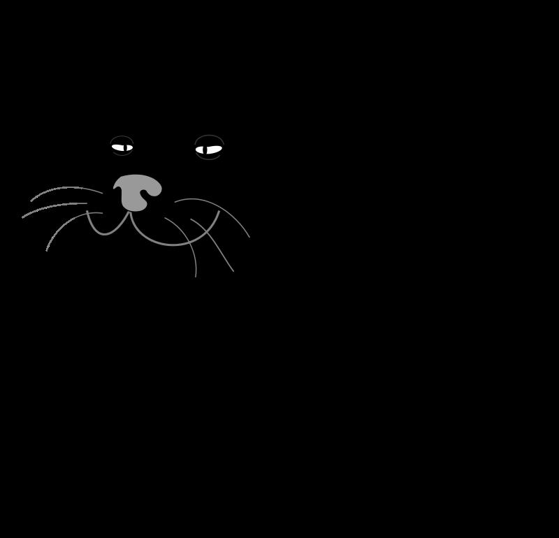 Free Black Cat / Gato Negro