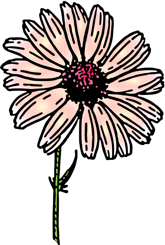 Free colored daisy 2