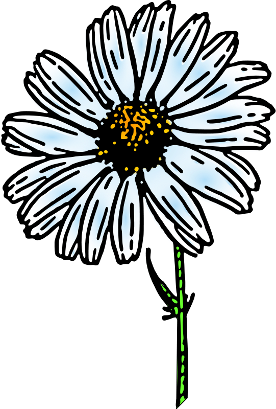 Free colored daisy 1