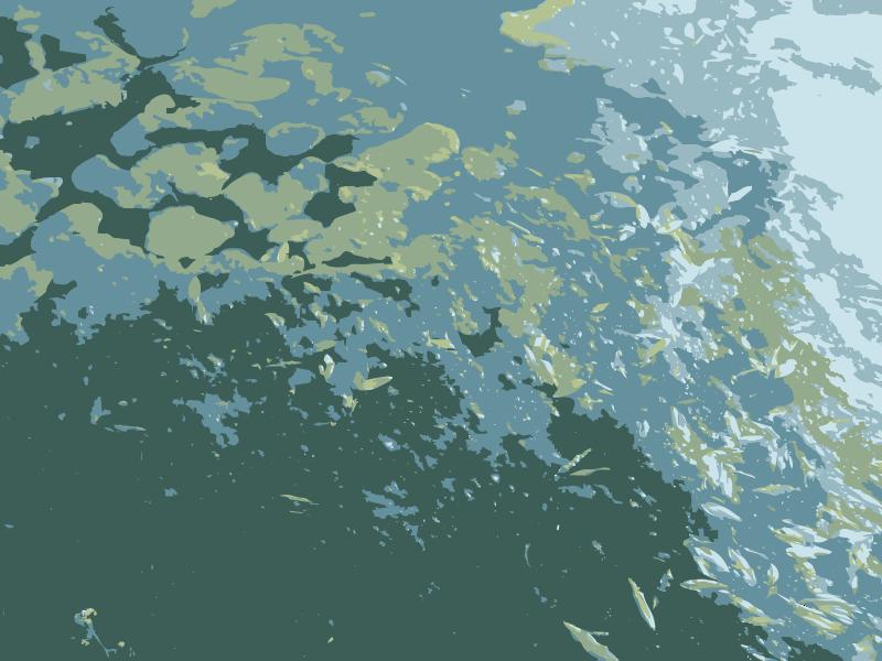 Free Missouri lily pond