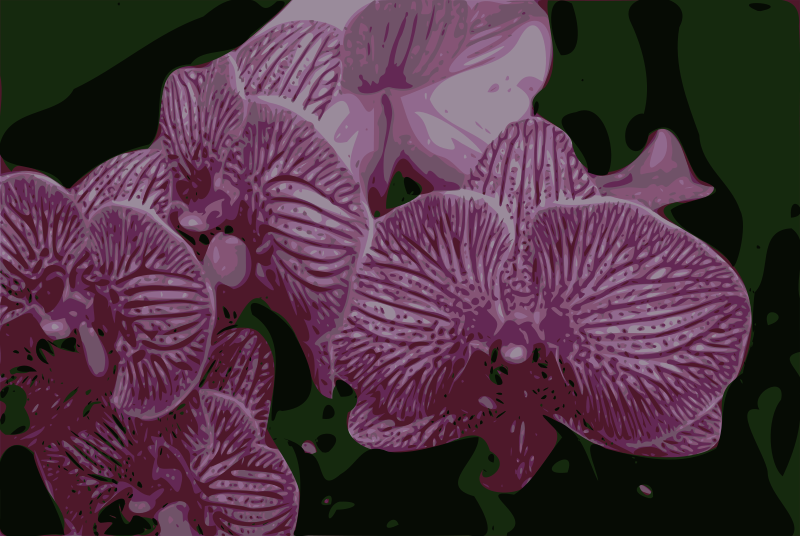 Free Orchids