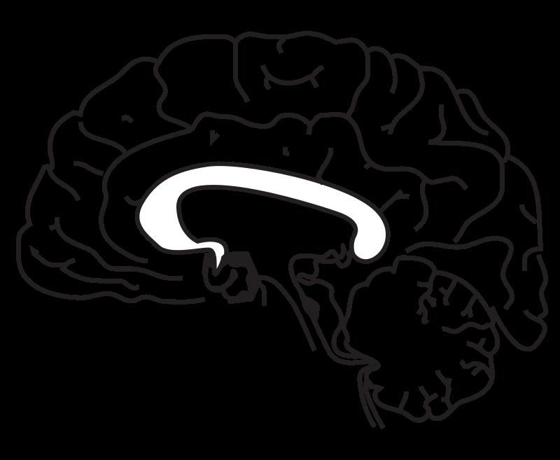 free clipart 58294main the brain in space page 157 brain rejon