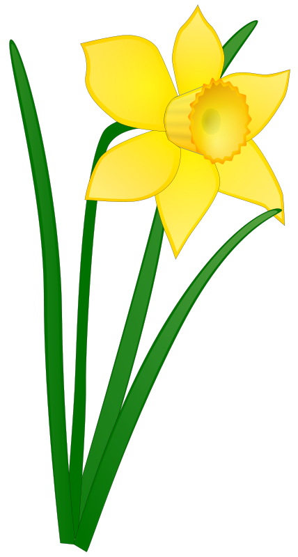 free clipart daffodil anonymous rh 1001freedownloads com daffodil clip art images daffodil clip art images
