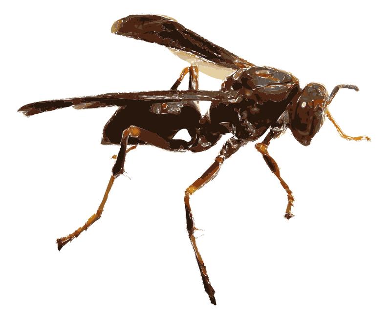 Free Wasp 16c