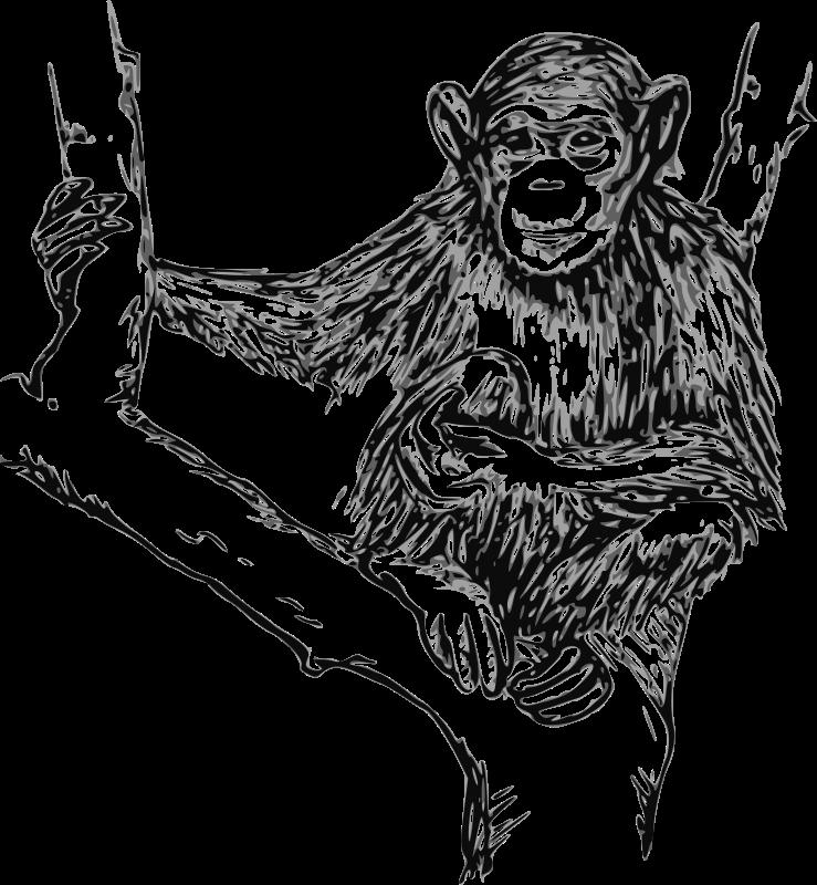 Free grayscale chimpanzee