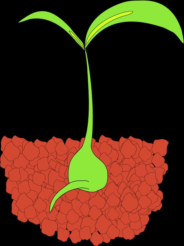 Free Seedling